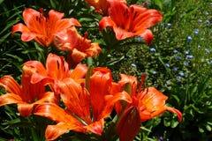 Een mooi boeket van tuin feestelijke bloemen Stock Fotografie