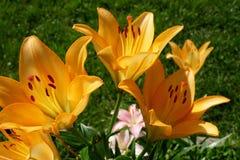 Een mooi boeket van tuin feestelijke bloemen Royalty-vrije Stock Foto's