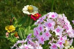 Een mooi boeket van tuin feestelijke bloemen Royalty-vrije Stock Afbeelding