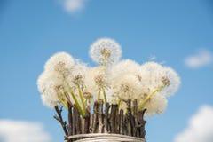 Een mooi boeket van witte ronde paardebloemen in een eigengemaakte vaas Royalty-vrije Stock Fotografie