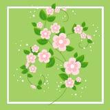 Een mooi boeket voor gelukwensen Gevoelige takken van roze bloemen De achtergrond van de lente Vector illustratie vector illustratie