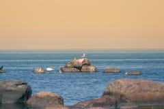 Een mooi de lentelandschap bij het strand met een kolonie van vogels Zwanen, aalscholvers die, meeuwen op de stenen bij het stran Royalty-vrije Stock Afbeelding