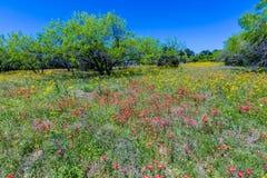 Een Mooi die Gebied met Divers Texas Wildflowers wordt bedekt Stock Foto's
