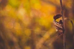 Een mooi droog blad krulde in een spiraalvormige vorm bij de stam stock foto's
