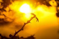 Een mooi gouden licht van zonsopgang op boomtak en insect die zich op pearch bewegen stock foto