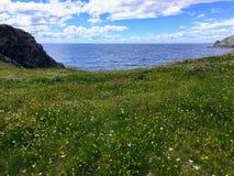 Een mooi grasrijk weidehoogtepunt van kleurrijke bloemen met de enorme Atlantische Oceaan op de achtergrond in Twilingate, Newfou stock fotografie