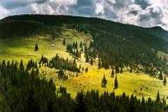 Een mooi Karpatisch landschap met bos Royalty-vrije Stock Afbeelding
