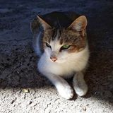 Een mooi katje genoemd Nico dat het materiaal van de kat doet royalty-vrije stock foto