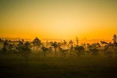 Een mooi, kleurrijk, artistiek landschap van een moeras in zonsopgang Stock Fotografie