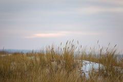 Een mooi landschap van duinen op de kustlijn van Oostzee Stock Afbeeldingen