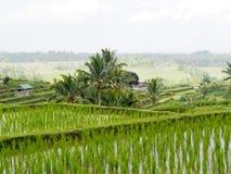 Een mooi rijstterras, kleine cabanas en palmen stock afbeelding