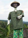 Een mooi vogelverschrikkerhoogtepunt van humeur in een padieveld in Bali, Indonesië royalty-vrije stock afbeelding