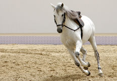 Een mooi wit paard dat op zand galoppeert royalty-vrije stock foto