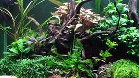 Een mooi zoetwateraquarium met levende planten stock afbeeldingen