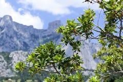 Een mooie bergweg op de zuidenkust met mooi vertakte zich boom in de voorgrond voor gebruik door reisbedrijven Stock Foto