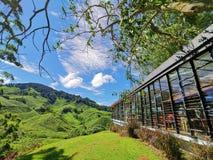 Een mooie blauwe hemel en een natuurlijke thee tuinieren stock foto's
