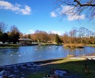 Een mooie blauwe hemelmiddag in het park na sneeuwdagen stock afbeelding