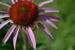 Een mooie bloem Royalty-vrije Stock Afbeeldingen