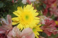 Een mooie bloem Royalty-vrije Stock Foto