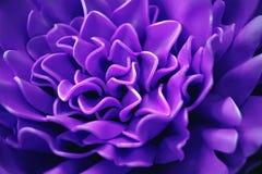 Een mooie bloem van purper schuim Samenvatting Vage Achtergrond Selectieve nadruk stock afbeelding