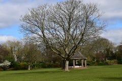 Een mooie boom Stock Foto's