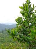 Een mooie boom met waterdalingen stock afbeelding