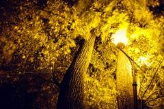 Een mooie boom wordt benadrukt door een lantaarn in het park royalty-vrije stock fotografie