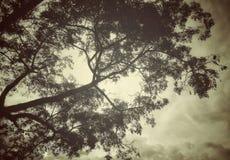 Een mooie boomtak met een hemelachtergrond royalty-vrije stock afbeelding