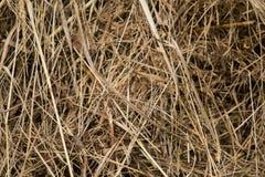 Een mooie close-up van een natuurlijk droog gras Royalty-vrije Stock Afbeeldingen