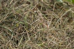 Een mooie close-up van een natuurlijk droog gras Royalty-vrije Stock Fotografie
