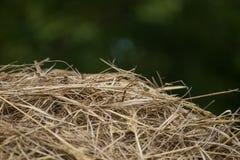 Een mooie close-up van een natuurlijk droog gras Stock Afbeelding