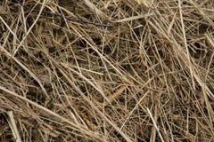 Een mooie close-up van een natuurlijk droog gras Stock Foto