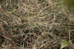 Een mooie close-up van een natuurlijk droog gras Stock Fotografie