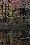 Een mooie dalingsbezinning in Cleveland Metroparks - Ohio - de V.S. Royalty-vrije Stock Afbeeldingen