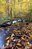 Een mooie de herfstdag in het bos Stock Foto