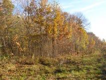 Een mooie de herfstdag in het bos Royalty-vrije Stock Afbeelding