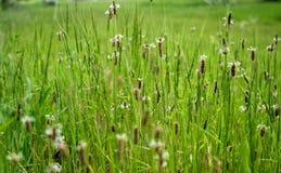 Een mooie de lentedecoratie Groen gras royalty-vrije stock foto's