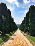 Een mooie die steeg met de slanke cipresbomen wordt geplant stock afbeeldingen