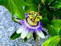 Een mooie en vreemde bloem royalty-vrije stock afbeelding