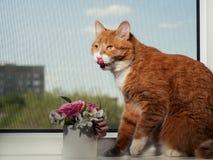 Een mooie gemberkat met zwart-witte strepen zit op de vensterbank en het kijken een weinig vanaf de camera Tegen royalty-vrije stock afbeelding