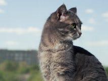 Een mooie grijze groen-eyed kat met zwart-witte strepen zit op de vensterbank en kijkt een weinig vanaf royalty-vrije stock afbeelding