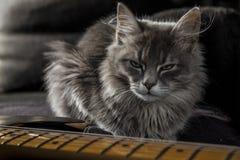 Een mooie grijze Perzische kat met een dreigende starende blik bewaakt de elektrische gitaar van de papa stock fotografie