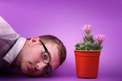 Een mooie groene cactus in een rode pot bevindt zich met het stromen toenam roze bloem zacht op een roze achtergrond Royalty-vrije Stock Afbeelding