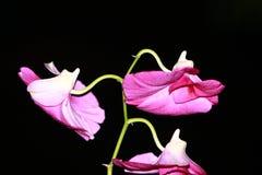 Een mooie groene en purpere bloem stock afbeeldingen