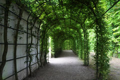 Groene pergola voorraadbeelden download 323 royalty vrije fotos