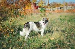 Een mooie grote bastaarde hond royalty-vrije stock afbeeldingen
