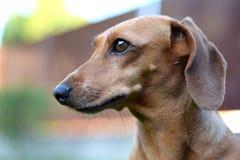 Een mooie hond in de tuin Stock Afbeelding