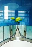 Een mooie installatie wordt de architecturale lijnen zacht Stock Foto