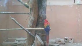 Een mooie jonge kleine papegaai met leuke acties in landbouwbedrijf van een openbaar park stock footage