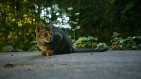 Een mooie kat stock fotografie